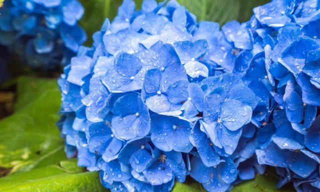 雨の多い時期に起こりやすいトラブルやお部屋の湿度を快適に保つ方法などを詳しくご紹介します。